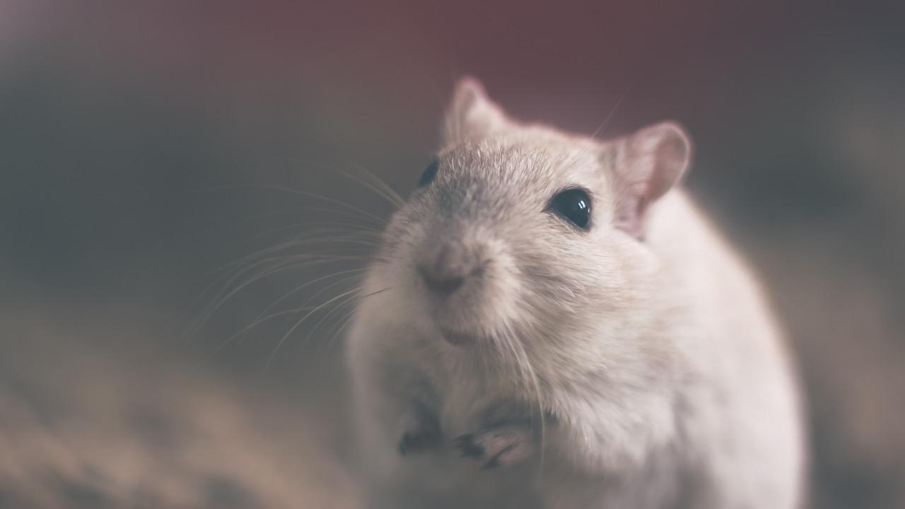 Quels appareils pour se débarrasser des souris